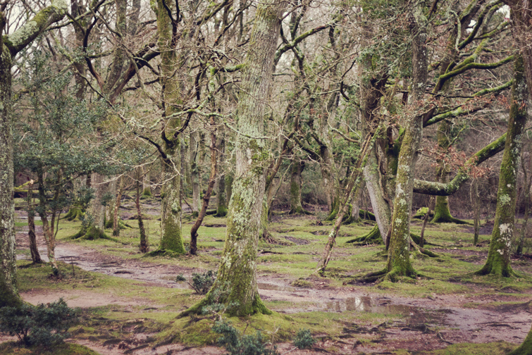 New Forest photo