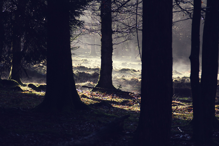 Misty forest photograph