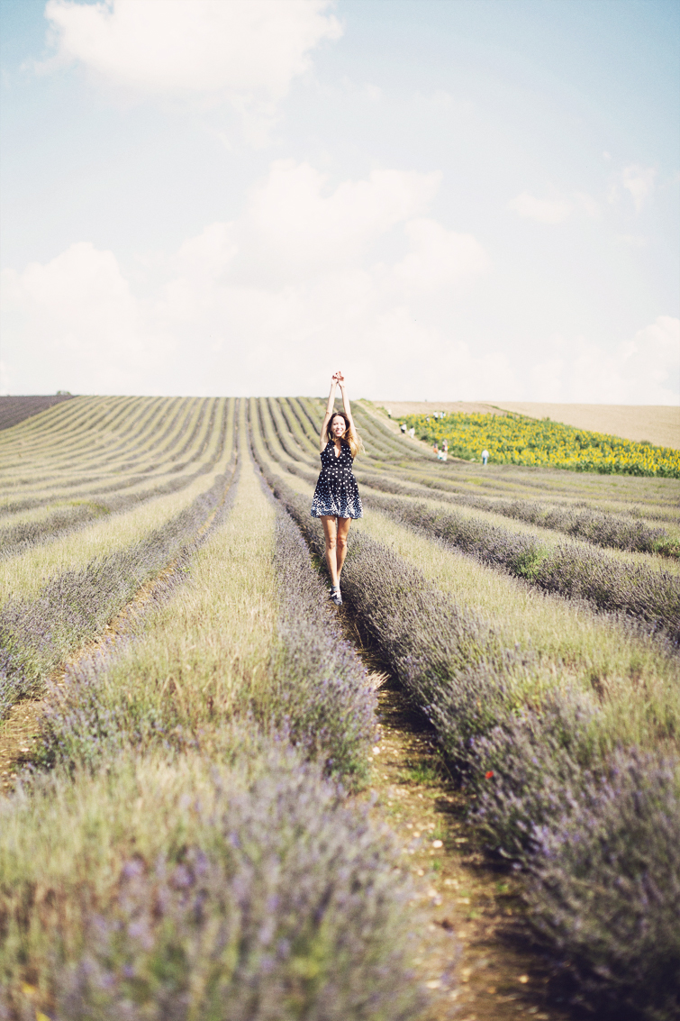 Lavender fields Hitchin photos