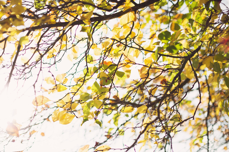Autumn leaves photographs