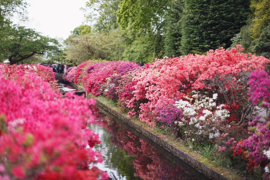 Keukenhof Tulip Gardens, Amsterdam, Holland